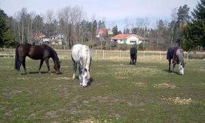 Lösdrift = Glada hästar