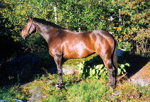 Activity – vilken häst!