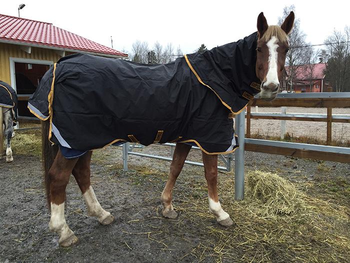 Kolla in Hästbloppis.se!!